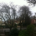 BEFORE: Lots Of Poor Cuts And Dead Branches On These Two Trees - Feb 14