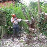 Jamie starting on the stumps of a Hazel