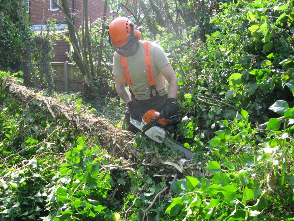 Jamie removing Ivy on a small Birch
