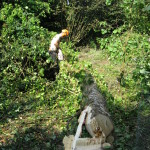 Jamie removing Ivy from a Birch after felling