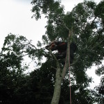 Jamie removing branches from the canopy