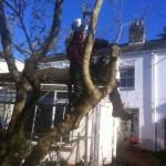 Jamie taking a limb off a Magnolia