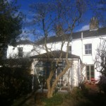 AFTER - Very Tidy Now With Height Reduced And Whole Tree Looking Better Shaped - Feb 14