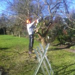 Jamie Removing Some Lower Branches