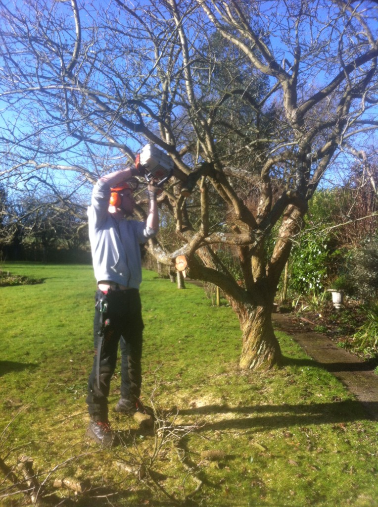 Jamie Removing Lower Branches From An Old Apple Tree.