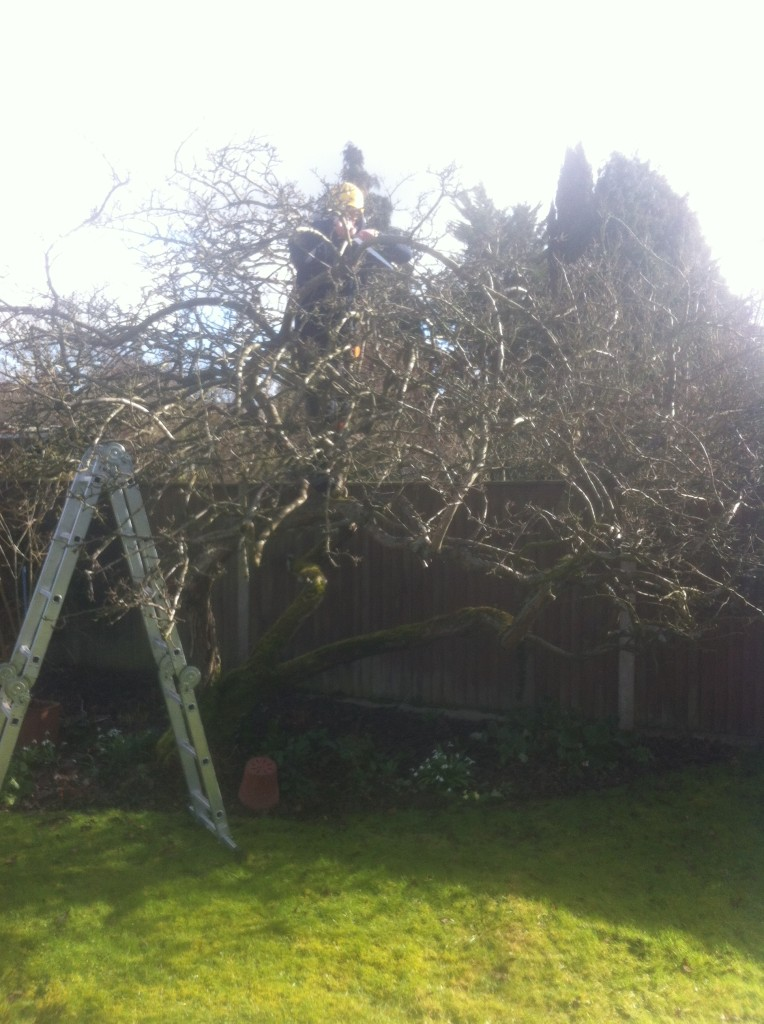 Working On An Old Apple Tree