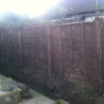 AFTER - Garden fence now showing, Ivy hedge removed - Feb'14