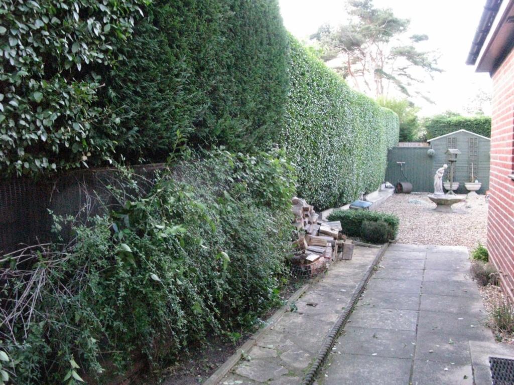 AFTER - Large Privet & Leylandii Hedge Trimmed & Looking Very Tidy  - Sept '15