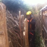 Cutting branches off the Leylandii hedge