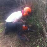 Jamie cutting a stump to ground level