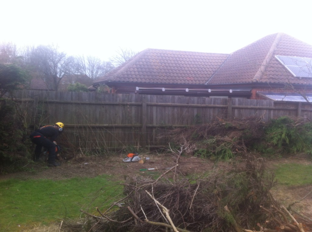 Most of the hedge dismantled