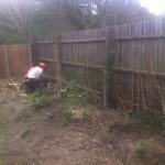 Last few cuts on the Leylandii hedge