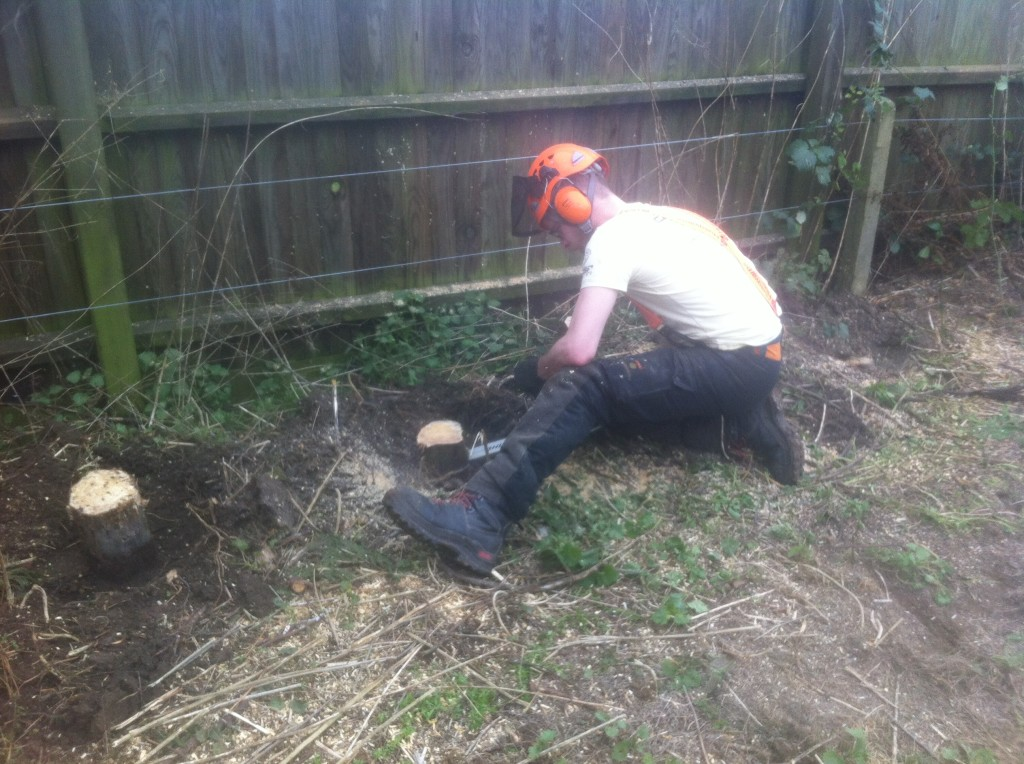 Jamie cutting the last few stumps to ground level