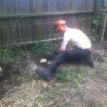 Jamie cutting the last few stumps to ground level