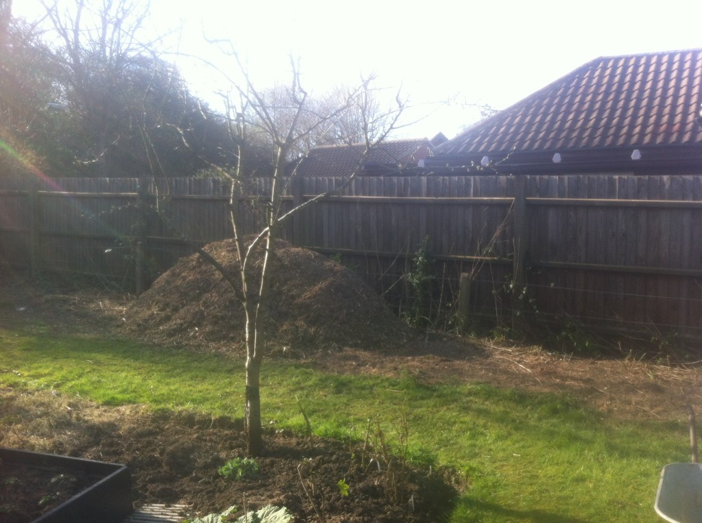 AFTER - Large Leylandii Hedge Dismantled To The Ground & Chippered - Mar '14