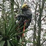 Working in a Rowan Tree