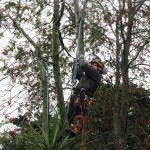 Getting into position in a Rowan Tree