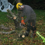 Dismantling a small Apple Tree