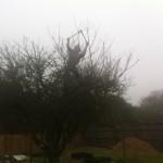Jamie using Loppers in an Apple Tree crown