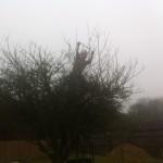 Jamie reducing an Apple Tree Crown