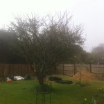 AFTER - Mature Apple Tree looking better after approx 25% Crown Reduction & Lift  - April 14