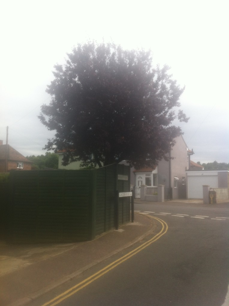 BEFORE - Medium Prunus Tree In Need Of A Crown Reduction & Lift - Oct '14