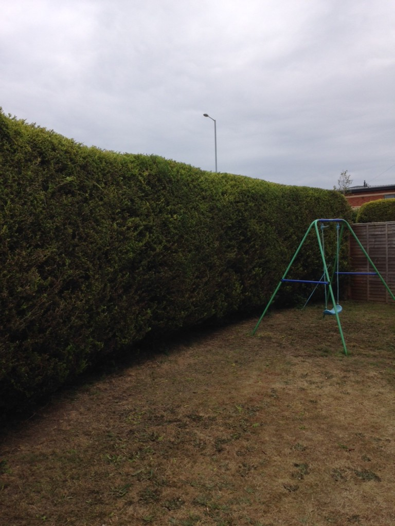 AFTER - Leylandii Hedge Now Looking Better With A Good Trim & Flat Top - June '15