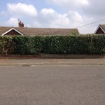 Hedge after a good height & width reduction