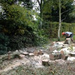 Sawing up a felled Birch
