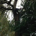 Jamie getting into position in a ancient Willow