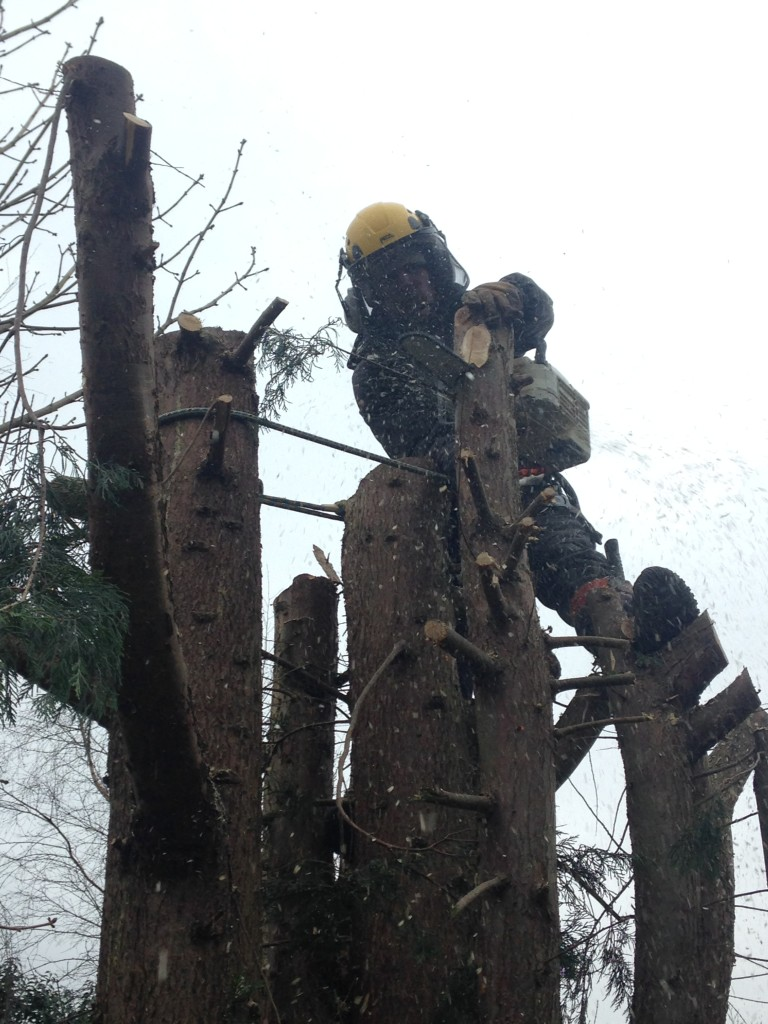 Using tree saw to dismantle
