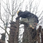 Taking off manageable pieces with the tree saw