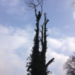 Last few branches being removed