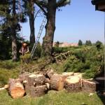 Lots of wood!!