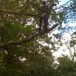 Tree Dismantling