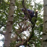 Tree dismantling 2
