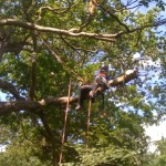 Tree dismantling 4