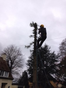 Dismantling Small Fir Tree