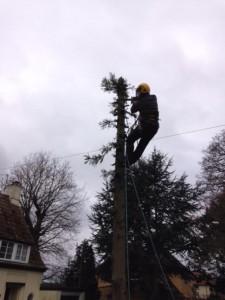 Dismantling Small Fir Tree
