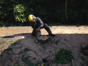 Cutting A Stump To Ground Level