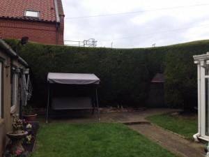 Finished Leylandii Hedge