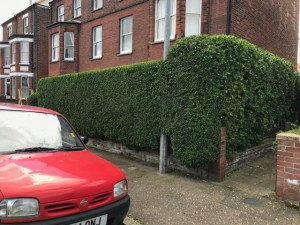 Nice Neat Privet Hedge