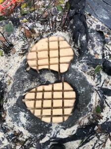 Bay Stumps Cut & Poisoned
