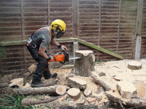 Last FewCuts On What Was A Large Leylandii Tree